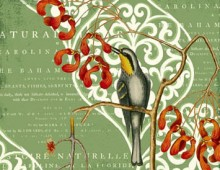 Williamsburg © by Creative Co-op, Inc. / Catesby BirdS & Scroll