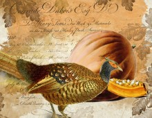 Creative Co-op, Inc. © / Pumpkin & Pheasant