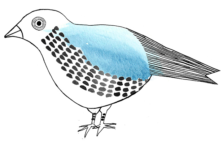 bird drawing_1