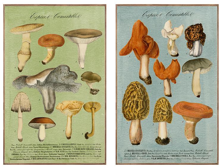spanguole.com » Creative Co-op, Inc. © Vintage Mushrooms with ...